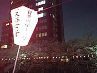 Kutani_joshi_bonbori_sakura