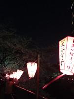 Kutani_joshi_bonbori_sakura2