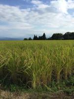 Tsumari_tanbo
