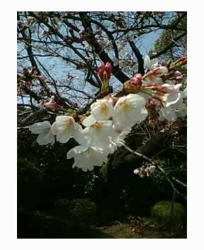 春早く 梅もほころぶ 如月中日